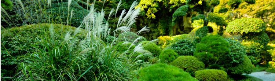 Az üde, szép, zöld kert